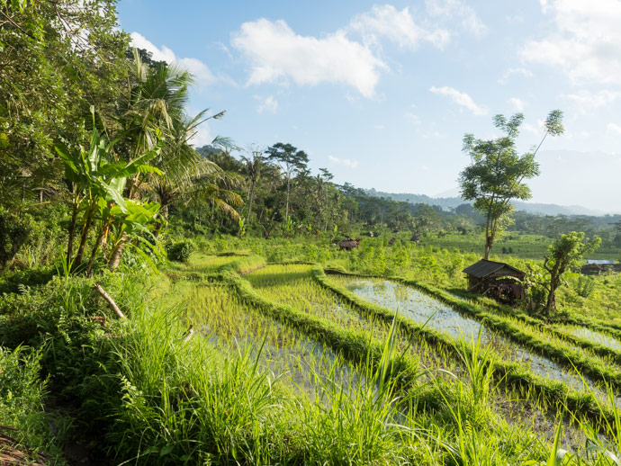 Sidemen Bali: Our Trek through the Rice Fields