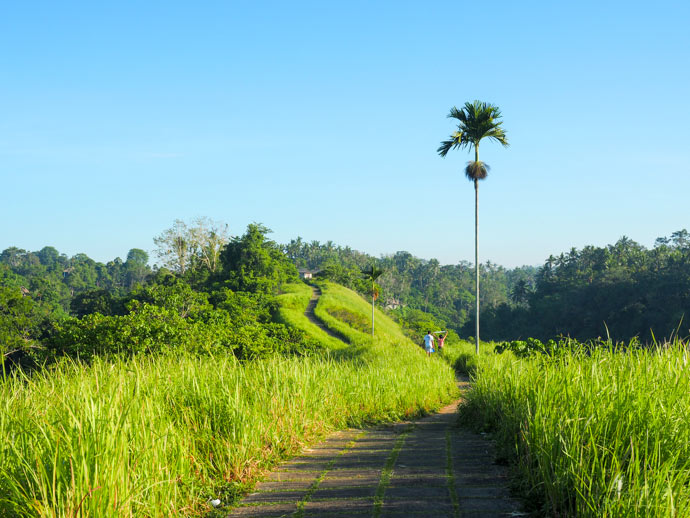 Campuhan Ridge Walk Ubud Views