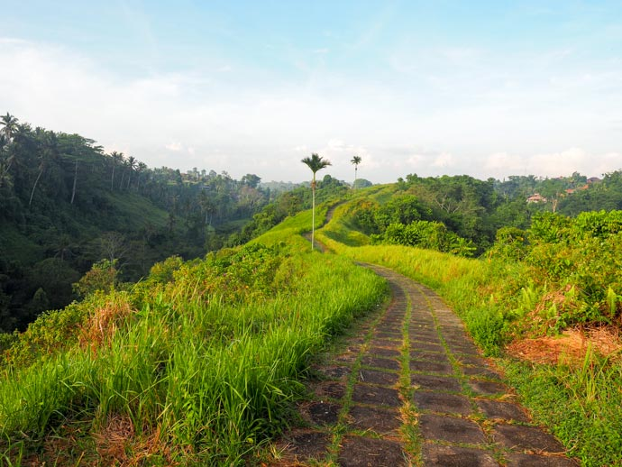 How to Get to the Campuhan Ridge Walk Ubud And What to Expect