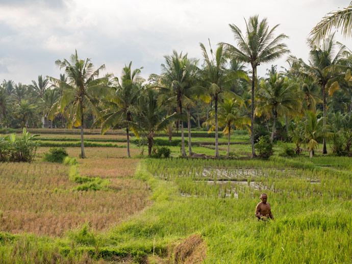 Walks In Ubud: Experience the Natural Side to Bali