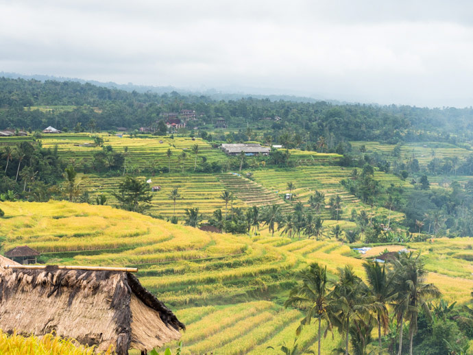 Jatiluwih Rice Terraces Bali: Experience The Life Of Rice