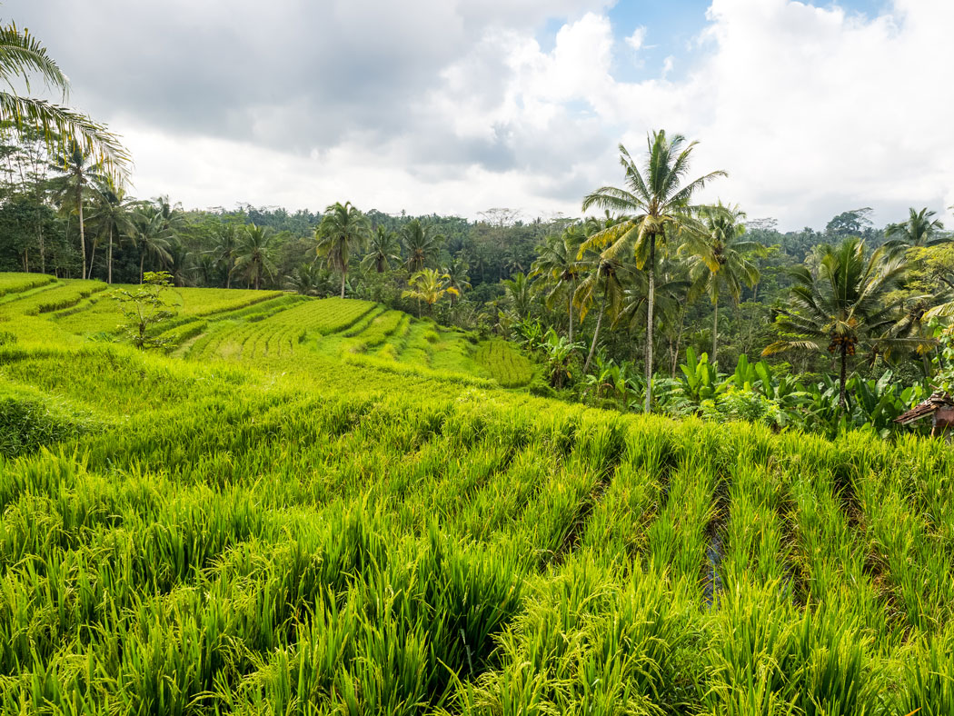 Ubud Travel