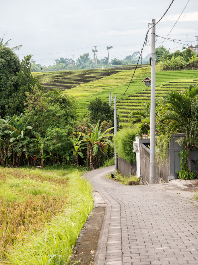 The First Sign Of Canggu Rice Fields Jalan Pura Blulang Yeh