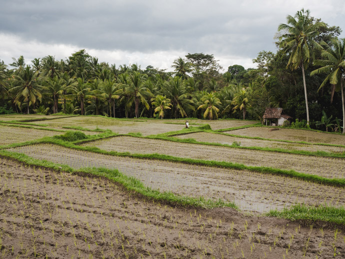 Kajeng Rice Fields Walk Ubud | Best Things To Do In Ubud Bali